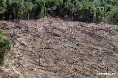 Clearcutting Amazon Rainforest